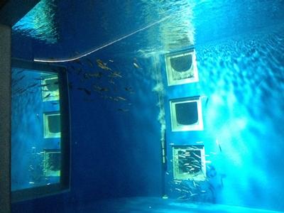 イカの飼育実験