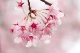 桜0412