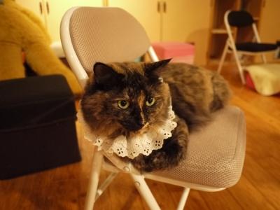 メイド猫カフェ?