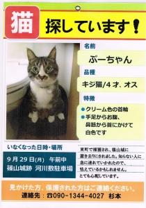 ぷーちゃんを探しています。