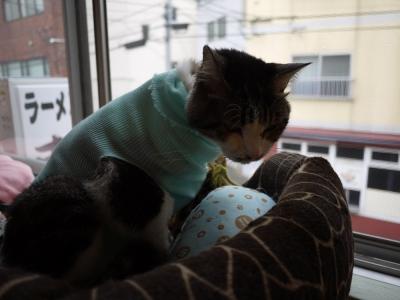 猫ルームに戻りました