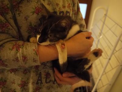 2014.10.13.捨て猫①
