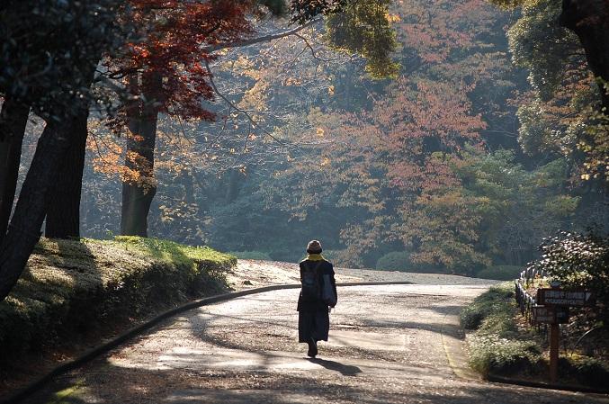 20111207新宿御苑 009A