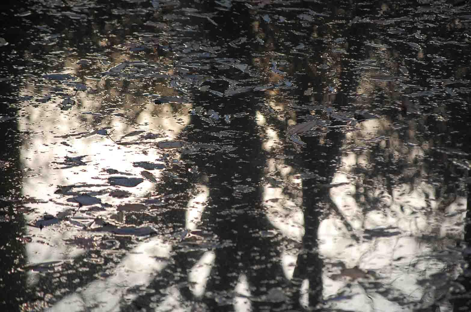 20111221新宿御苑 043A