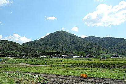 南草木(110923)-06