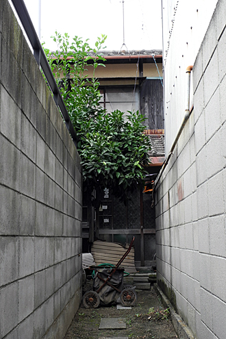yamaji-01.jpg