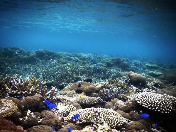 宮古島の珊瑚礁
