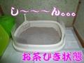 不評なトイレ?