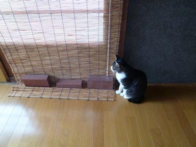 気配を察する猫