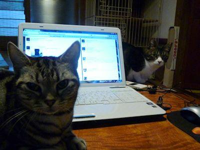 猫らとの距離