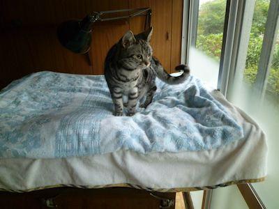 ヒトの布団は日中、猫らのもの