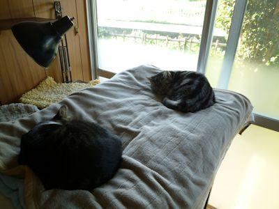 猫は「寝る子」