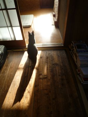 朝陽は玄関から当たる