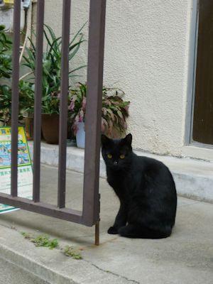 黒猫の美人さん