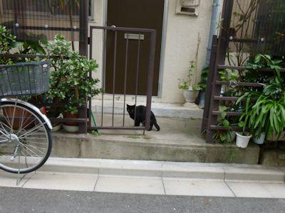またしても猫発見~