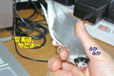 DSC_2280貂・convert_20141006192439