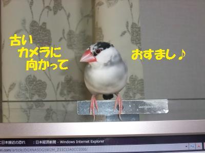DSCF5410_convert_20140330171825.jpg