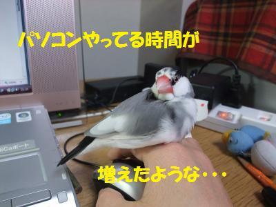 DSCF6231_convert_20140216143722.jpg