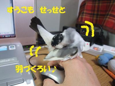 DSCF6232_convert_20140216143545.jpg