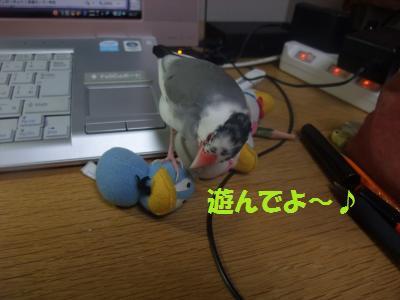 DSCF6273_convert_20140209185342.jpg