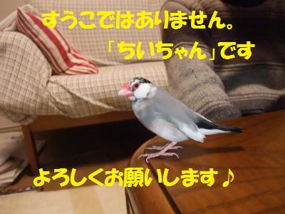DSCF6649_convert_20140227192952.jpg