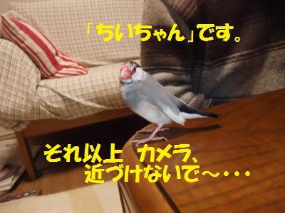 DSCF6650_convert_20140227193133.jpg