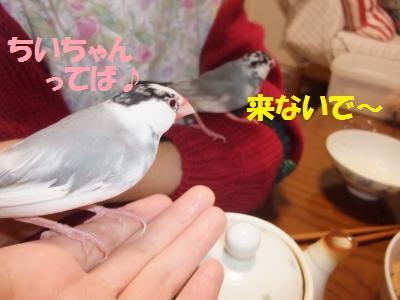 DSCF6652_convert_20140227193331.jpg