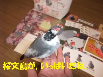 DSCF6695_convert_20140301230614.jpg