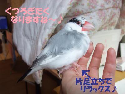 DSCF6847_convert_20140317225943.jpg