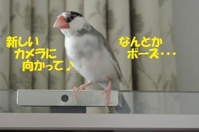 DSC_0273_convert_20140330171909.jpg