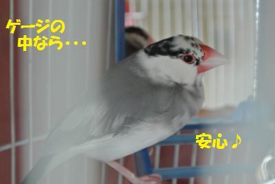 DSC_0284_convert_20140330171944.jpg