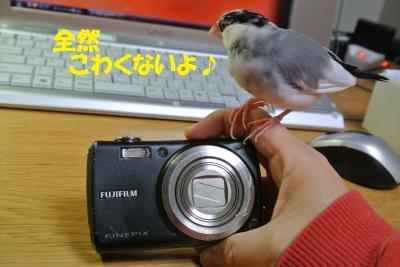 DSC_0363_convert_20140330171634.jpg