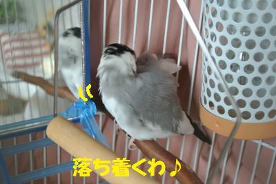 DSC_0449_convert_20140420193707.jpg