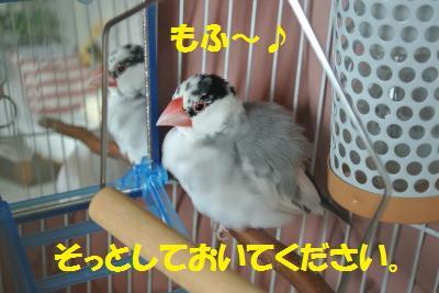DSC_0451_convert_20140420193816.jpg