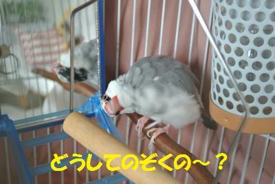 DSC_0453_convert_20140420193740.jpg