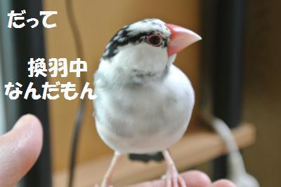 DSC_0497_convert_20140420000355.jpg