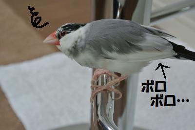 DSC_0501_convert_20140420000432.jpg