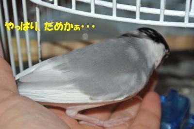 DSC_0833_convert_20140606214254.jpg