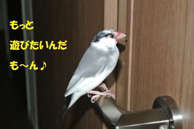 DSC_0835_convert_20140606214133.jpg