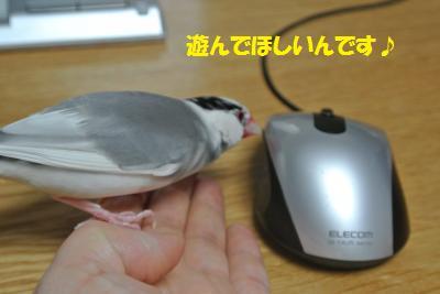 DSC_0950_convert_20140610223009.jpg