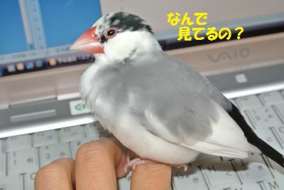DSC_0986_convert_20140620221531.jpg