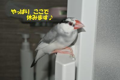 DSC_1343_convert_20140730220930.jpg