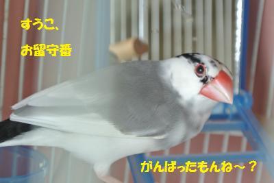 DSC_1347_convert_20140719211454.jpg