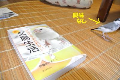 DSC_1379_convert_20140726184440.jpg