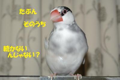 DSC_2146_convert_20140915192329.jpg