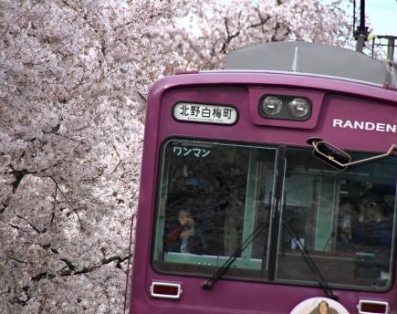 嵐電と満開の桜