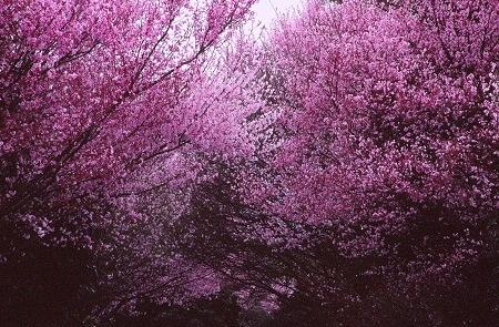 20140328_noririn.jpg