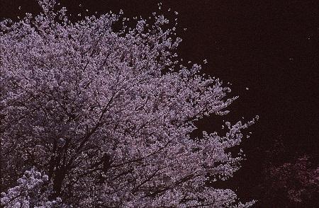 20140402_noririn.jpg