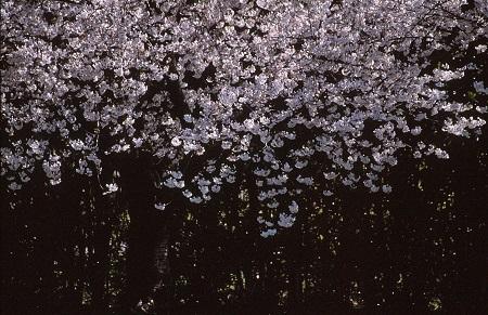 20140407_noririn.jpg