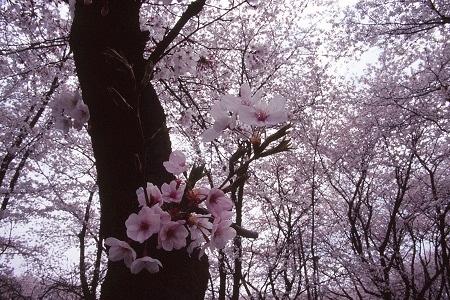 20140411_noririn.jpg
